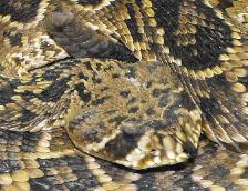 Fast Professional Snake Removal Snake Trapping Snake Control