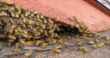 Bee removal in Plant City
