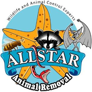 Allstar Animal Removal - Bee & Animal Removal Specialists
